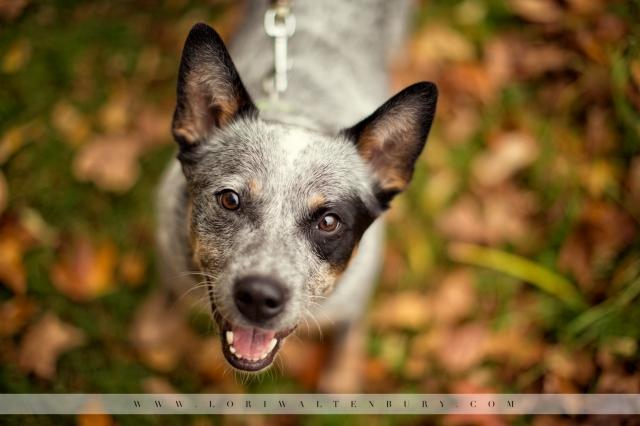 smiling-dog-photo